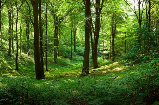 forest-trees-green